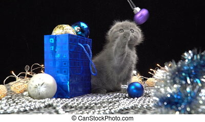 Scottish fold kitten plays with Christmas decorations.