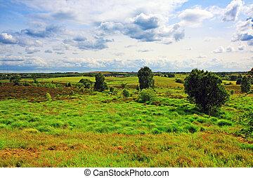 Scottish landscape with grass