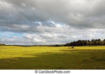 Scottish landscape with horses