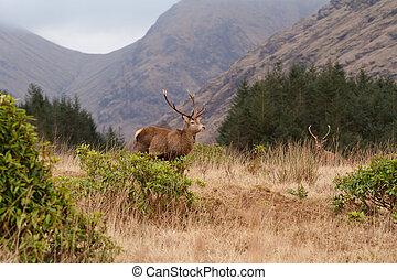 Scottish Mountains - a view of Glen Etive Scotland
