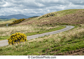 Scottish single track road with broom on a moor in the highlands