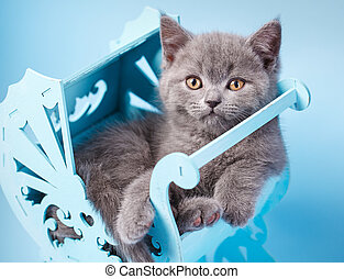 Scottish straight kitten. Kitty in a decorative cradle