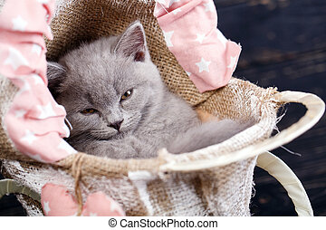 Photographing a kitten at a photo studio