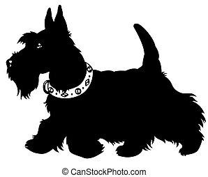 scottish terrier - dog scottish terrier breed, side view,...