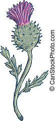 scottish-thistle-DWG - Drawing sketch style illustration of...