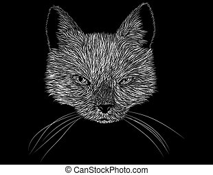 Scratch Board Art of a Cats Head and Face