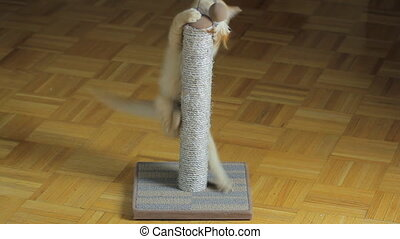 Scratching post - Kitten playing on the scratching post