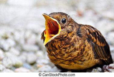 Little bird fallen out of the nest.