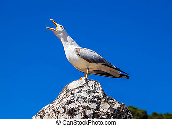 Screaming seagull on a background of blue sky close-up