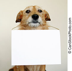 Cute scruffy dog holding a blank sign