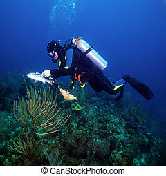 Scuba Diver Hunting Fishes with Spear Gun