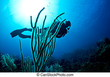 Scuba diver on a tropical reef - A lady scuba dives on a ...