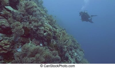 Scuba diver swimming near coral reef and tropical fish in...