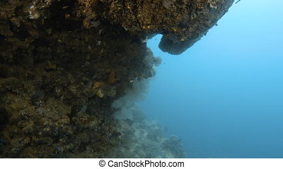 Scuba diver swimming towards a coral reef - A full shot of a...