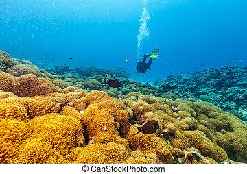 Scuba diver underwater examine closely corals