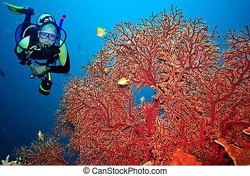 Scuba diver - Underwater landscape with scuba diver and ...
