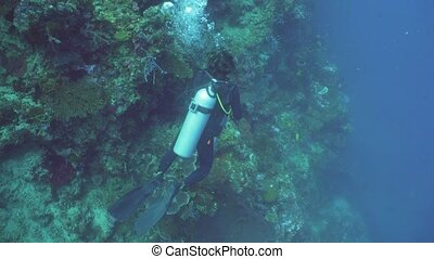 Scuba Diver underwater. - Scuba diver explores underwater...