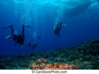 Scuba Divers heading back to the Boat - Divers heading back ...