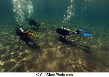 Scuba divers in the Red Sea.