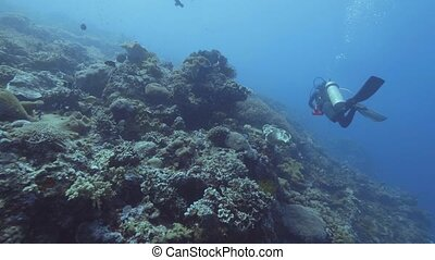 Scuba divers swimming underwater blue sea among coral reef...