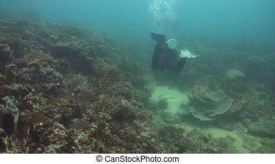 Scuba Divers underwater. Philippines, Mindoro. - Scuba...