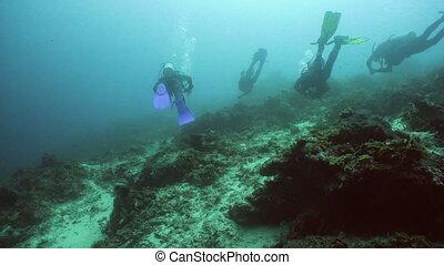 Scuba Divers underwater. - Scuba divers explores underwater...