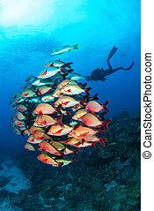 Scuba diving at Reef