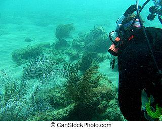 scuba diving - Scuba Diving fish coral reef lobster ship...