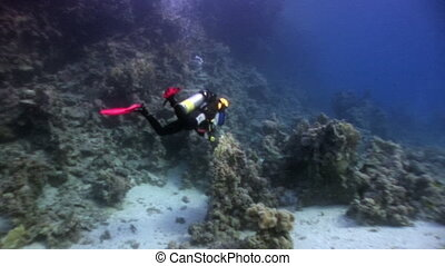 Scuba diving near school of fish in coral reef relax...