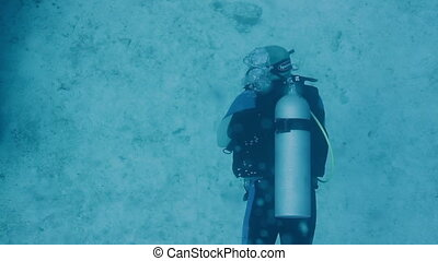 scuba diving off cozumel island, mexico, one of the world's...