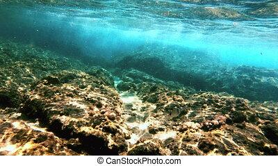 scuba diving underwater fish 4k