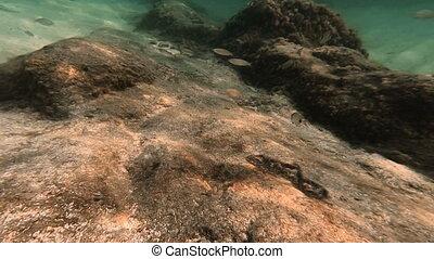 scuba diving underwater fish