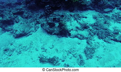 Scuba diving. View of fishes and seaweed - Scuba diving....