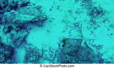 Scuba diving. View of fishes scurry on seabed, close-up