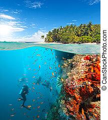 scuba, riff, gruppe, koralle, taucher, erforschen