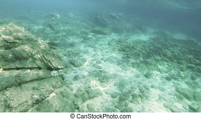 scuba- tauchen, underwater, 4k