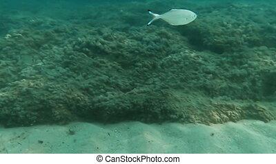 scuba- tauchen, underwater, fische