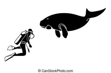 scubadiver, und, dugong