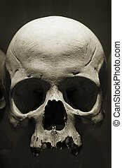 Skull in Kutna Hora ossuary, Czech Republic.
