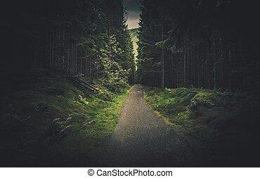 scuro, abete rosso, foresta, traccia, segno, scia