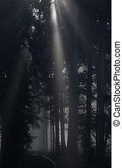 scuro, foresta, con, raggio luce