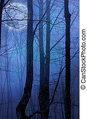 scuro, notte, foresta, agaist, luna piena