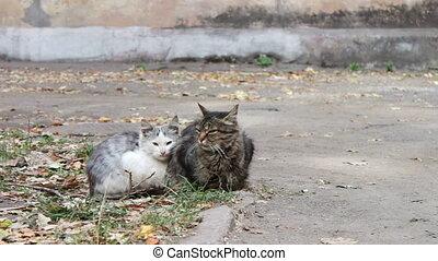 sdf, chat, deux, rue., séance