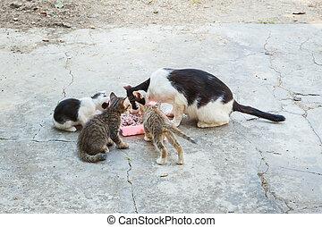 sdf, chat, et, peu, chaton, manger, riz, sur, plat