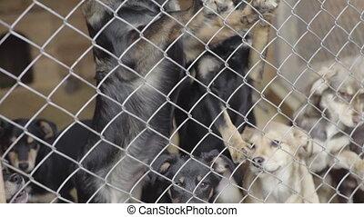sdf, chiens, shelter., mouvement, lent, chien