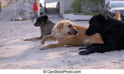 sdf, rue, mensonge, trois, chiens, stationnement, groupe, ...