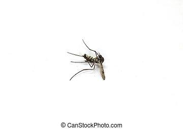 sdraiarsi, zanzara, morto
