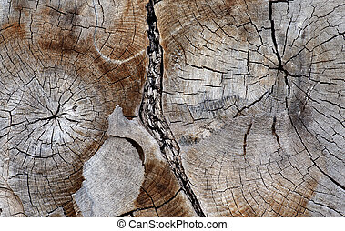 seção, árvore, antiga, crucifixos, hardwood