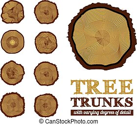 seção transversal, de, a, tronco, vetorial, ilustração