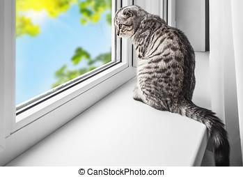 Se sienta, alféizar, gato